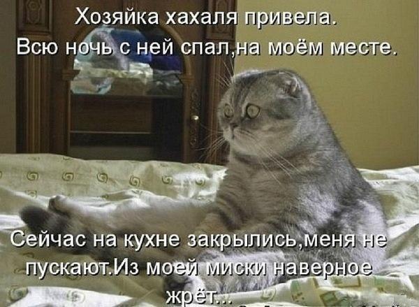 Картинки женщин кошек