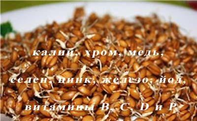 пшеница для рыбалки на карася